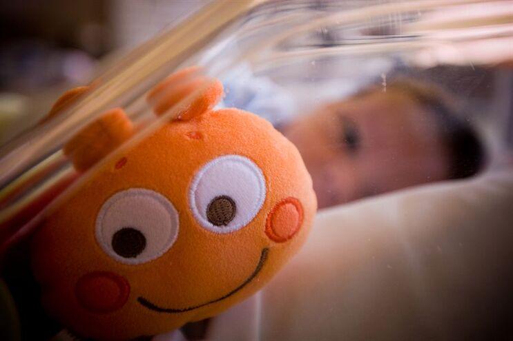 Proteínas, gorduras e açúcares do leite materno  ajudam a proteger o bebé contra infeções