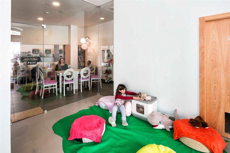 O Café Pet & Tea, em Coimbra, é um café de gatos, com uma área específica onde os clientes podem afagar