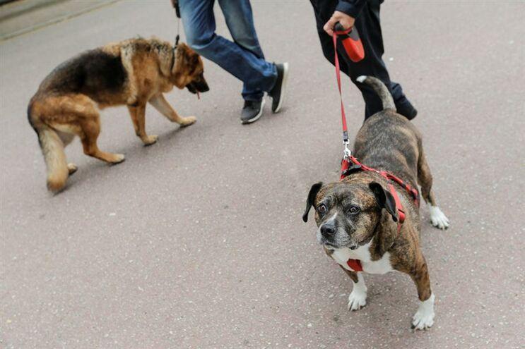 Projetos do PAN, do BE e do PEV possibilitam a permissão de animais de companhia em estabelecimentos