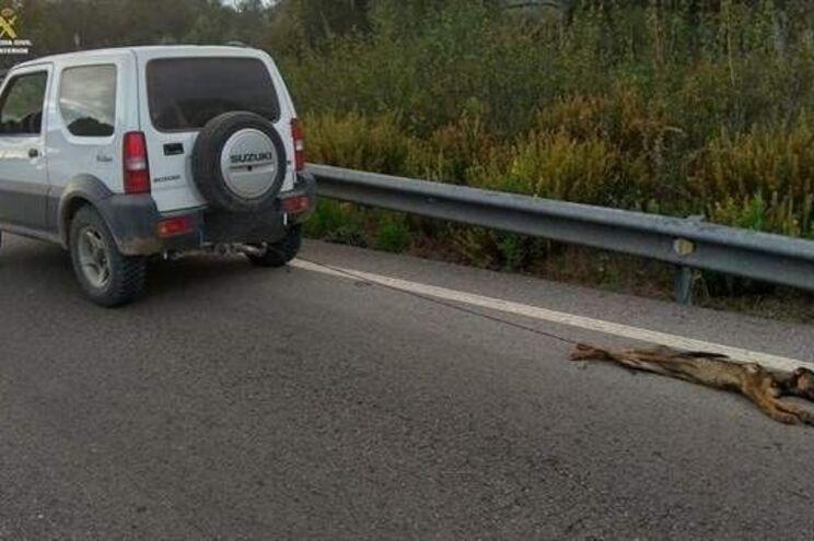 Detido por matar cão ao arrastá-lo vários quilómetros com o carro