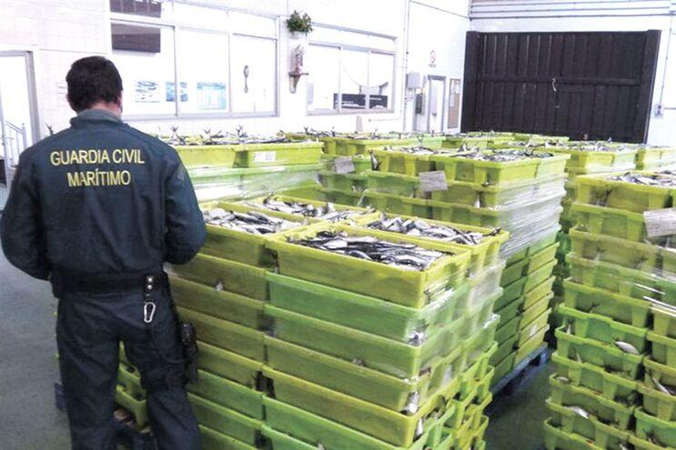 Guardia Civil aprendeu 6300 quilos de sardinha no porto de Sada, em La Corunha