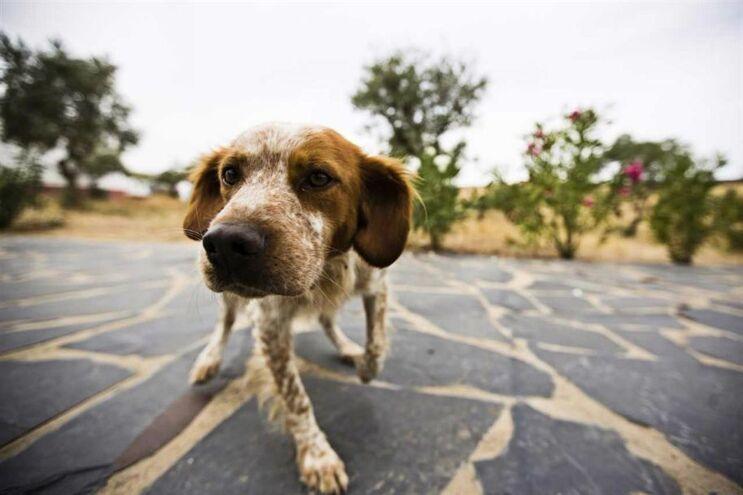 Traficante em fuga atirou droga a cães e terá de pagar desintoxicação dos animais