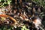 Cadáveres na região da Gorongosa