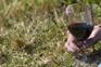 Álcool ativa os neurónios (células cerebrais) que, normalmente, estimulam a fome