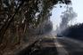 """Fogo queimou uma """"área substancial"""" de povoamento florestal e mato"""