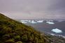 Alterações climáticas fazem crescer vida vegetal na Antártida