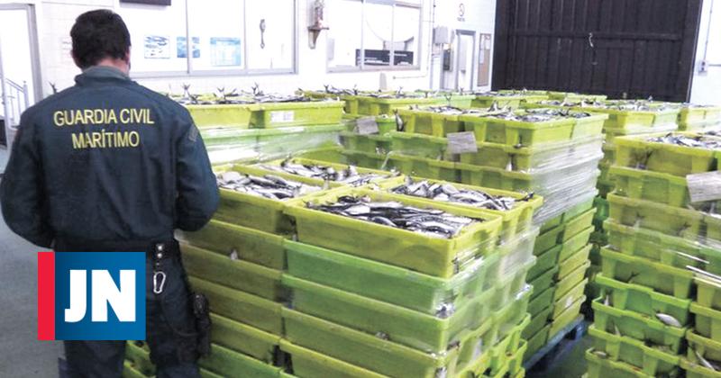 Resultado de imagem para Rede na Galiza traficava sardinha com destino a Matosinhos