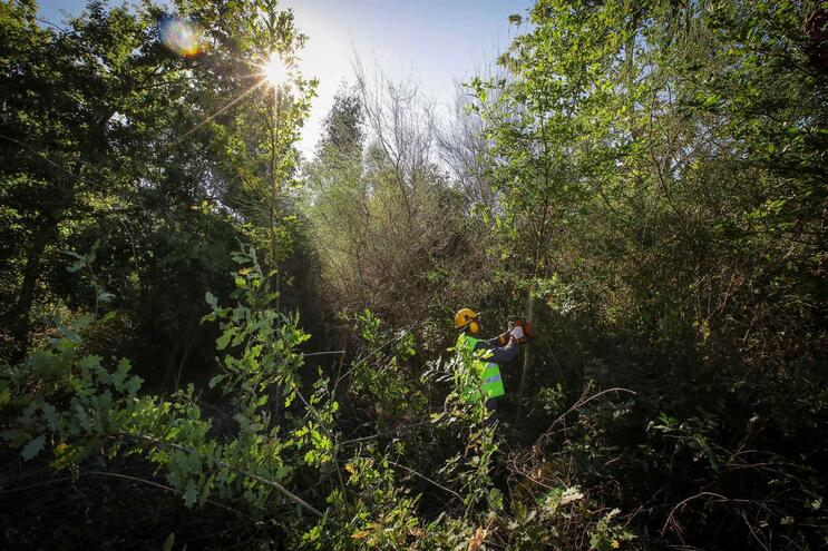 Navigator quer usar folhas, ramos e cascas para substituir plástico