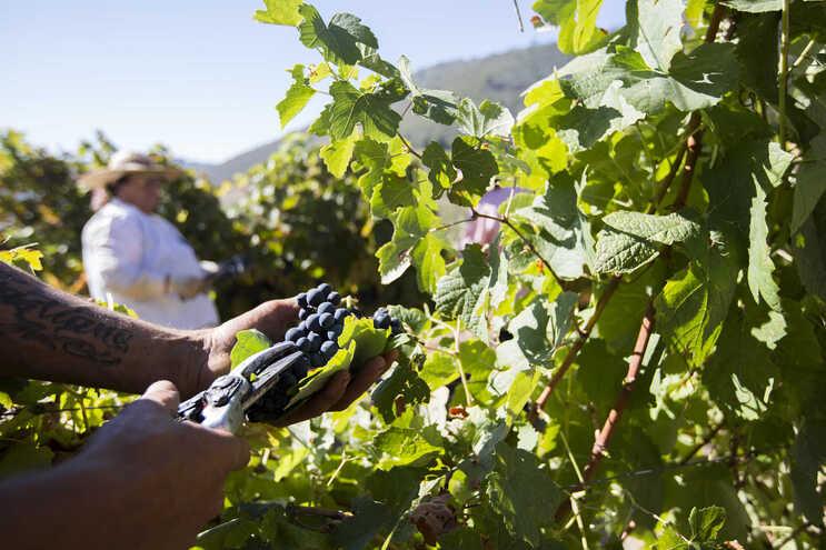 Na última década, há registo de vários episódios de granizo na primavera que têm devastado vinhas do