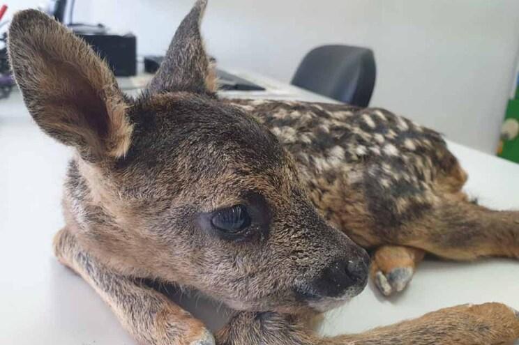 Animal resgatado após alerta de um popular