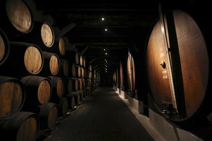 FCUP estuda potencial do vinho do Porto para tratar doenças de pele