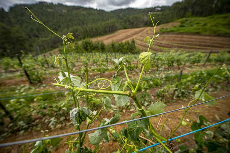 Granizo nos últimos dias tem afetado as vinhas e outras culturas agrícolas