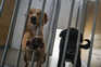 Portugal envia 13 mil animais para adoção no estrangeiro