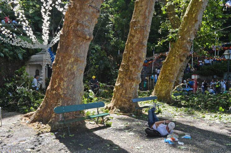 Queda de árvore  no Arraial do Monte causou a morte a 13 pessoas
