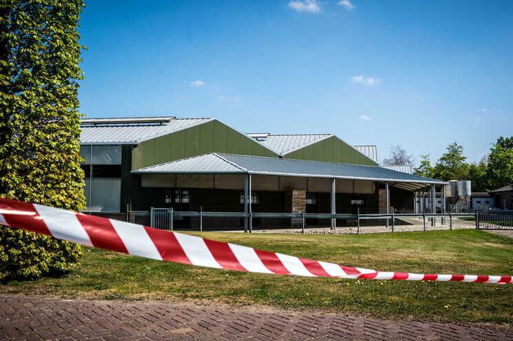 Funcionários de uma quinta de criação de martas nos Países Baixos terão contraído o vírus através desses