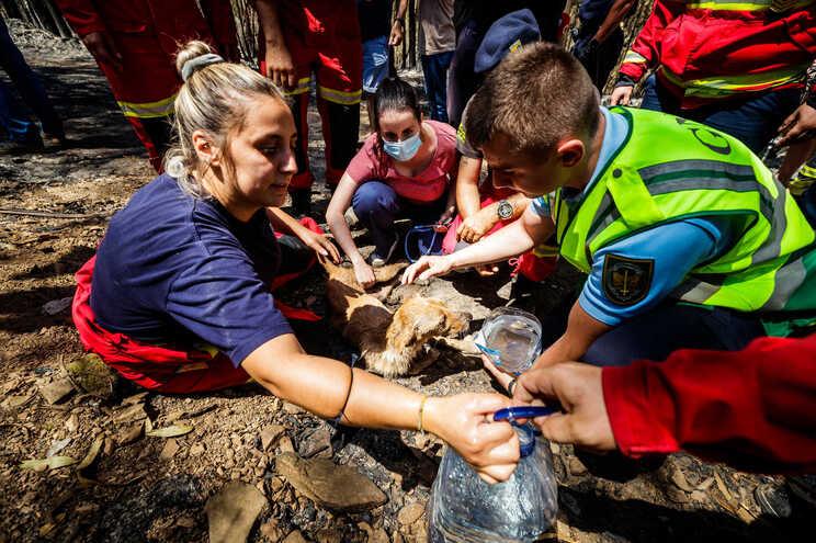 Incêndio atingiu no sábado dois canis ilegais no concelho de Santo Tirso, matando 54 animais