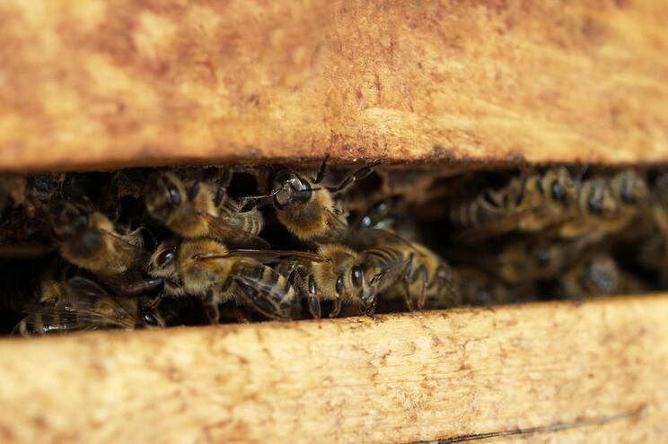 Patrick Murfet já fez um depósito de quase 22.700 euros pelas abelhas e pode perder mais de 113 mil se