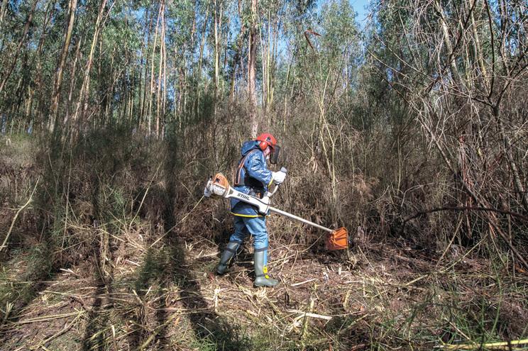 Empresas florestais estimam que cumprir a lei da limpeza de terrenos custaria 423 milhões de euros por