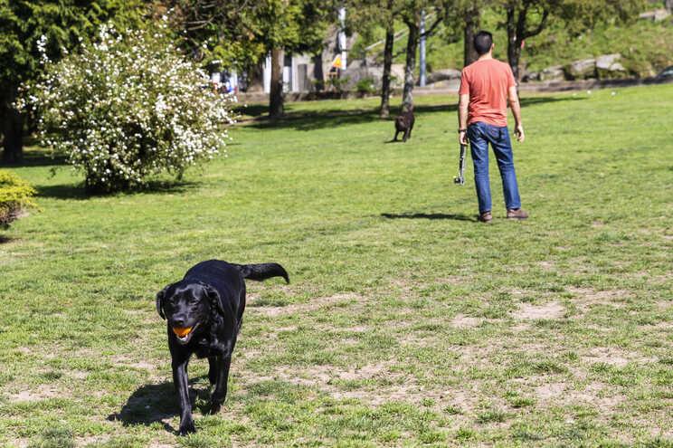 Nos cães, abanar a cauda é sinal de felicidade, mas há outras mensagens menos comuns