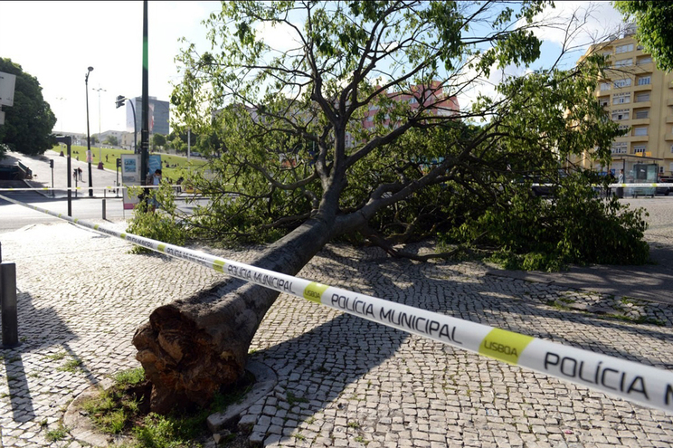Árvore caiu no dia 24 de abril
