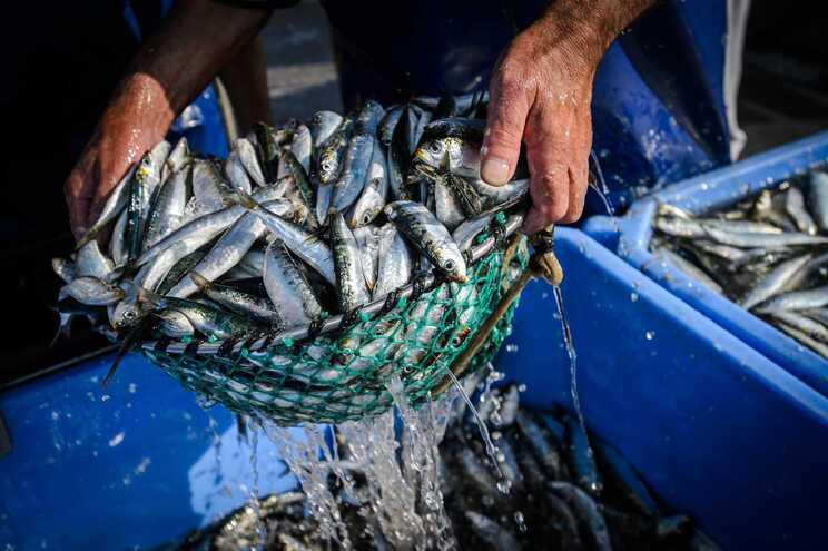 Quota de pesca da sardinha fixada em 10 mil toneladas até julho