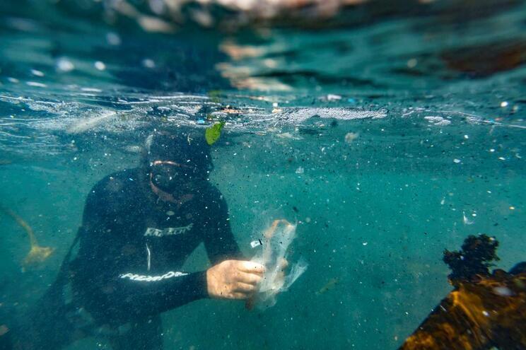 Microplásticos presentes em detergentes e artigos de cosmética acabam por ir parar ao mar