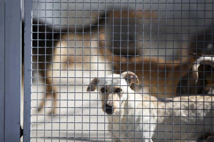 Esterilizar apenas os animais que são adotados não é suficiente, alerta a associação ANIMARCO