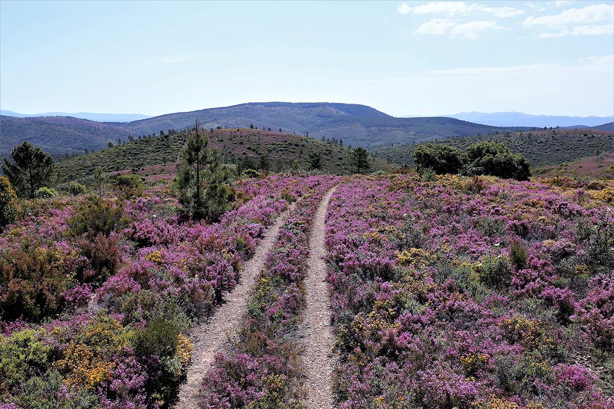 Serra da Malcata - uma miríade de cores e cheiros enche o percurso