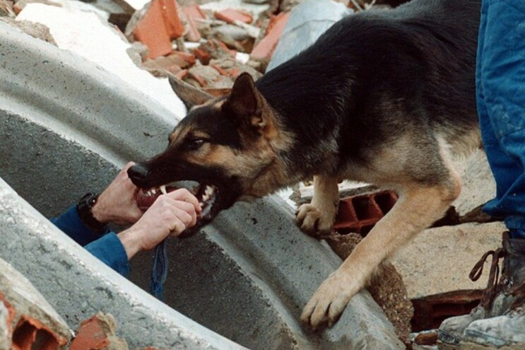 Proprietária do pastor-alemão alegou que o animal apenas reagiu a um ataque do caniche