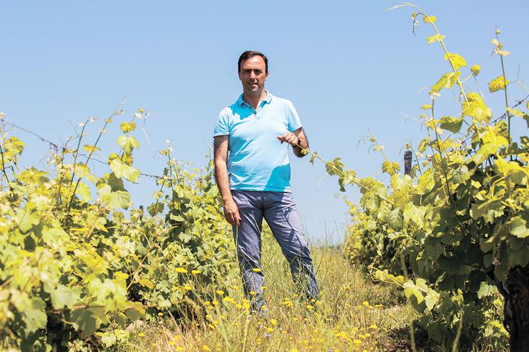 Rui Soares, presidente da Associação de Vitivinicultores Profissionais do Douro, frisa a importância