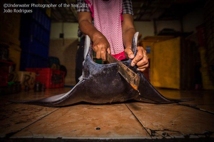 Português galardoado em concurso mundial de fotografia subaquática