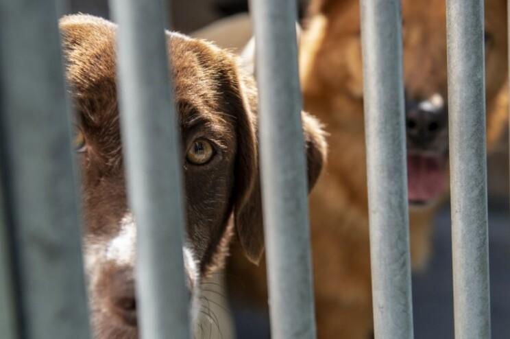Em março, o município de Leiria aprovou o investimento num novo canil para mais de 100 animais