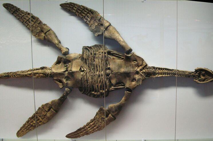 """Os plesiossauros, """"semelhantes ao mítico monstro de Loch Ness"""", podiam atingir 20 metros de comprimento"""