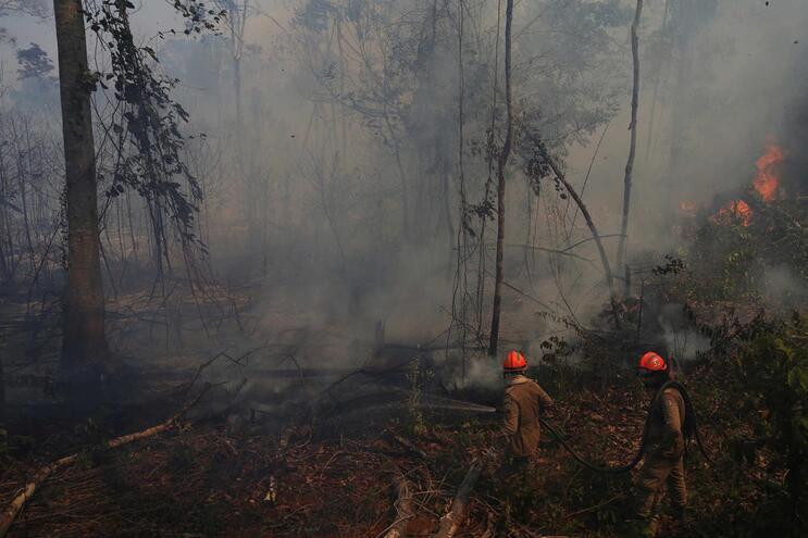 Governo brasileiro lança plano de combate à desflorestação ilegal na Amazónia