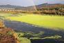 Rio Tejo corre tóxico até Vila Velha de Ródão