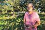 Frio arrasa produção de castanhas em Trás-os-Montes