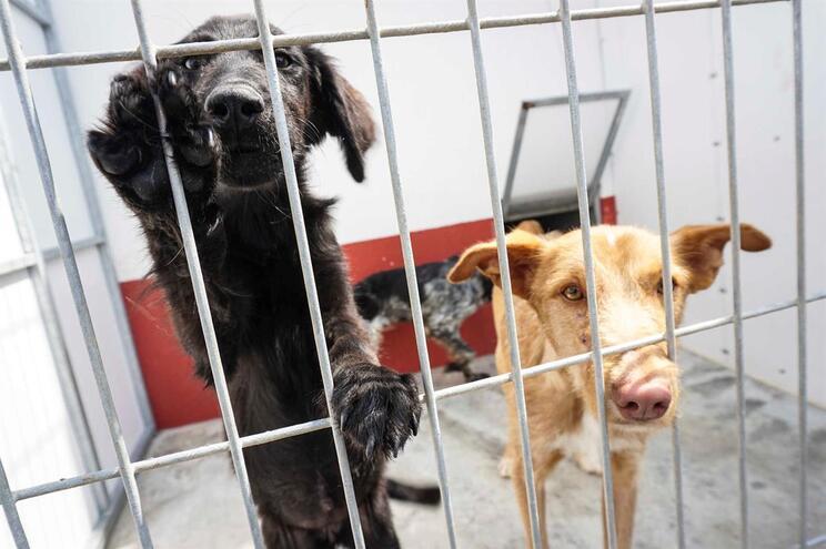 Parlamento rejeita rede urgente para recolher e esterilizar animais