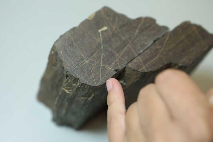 Há uma gravura rupestre em Foz Côa que está a intrigar os arqueólogos