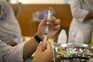 Oxford e AstraZeneca testam vacina contra variante da África do Sul