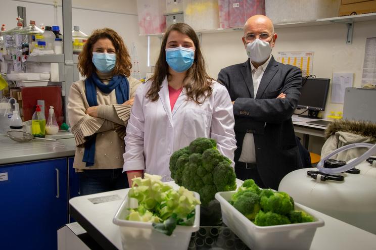 Sónia Ferreira (ao centro), acompanhada dos orientadores Manuel António Coimbra e Susana Cardoso