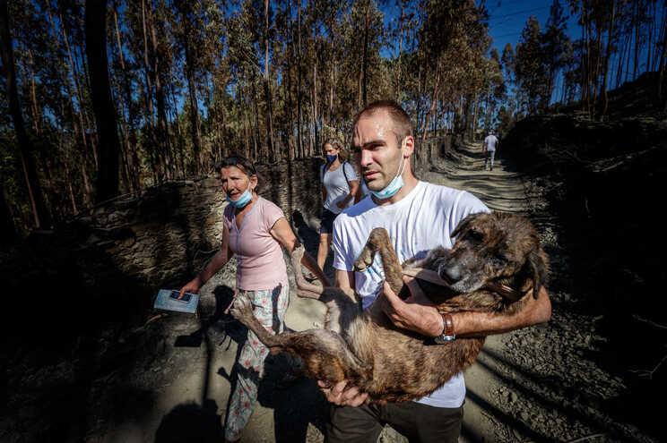 Voluntários retiraram no domingo animais feridos do abrigo