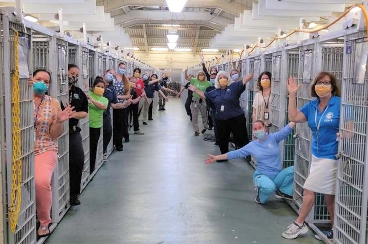 Norte-americanos correm a adotar animais durante isolamento
