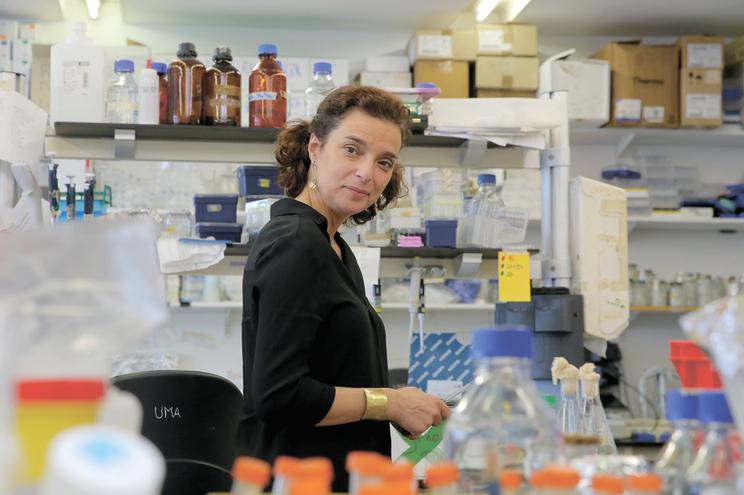 A cientista Maria Manuel Mota lançou repto aos investigadores no dia 12