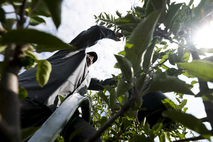 Tavira pode reabrir local para isolar trabalhadores agrícolas