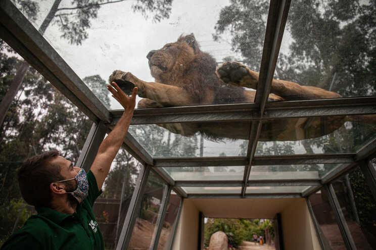 Zoo de Santo Inácio reabre com 12 novos animais
