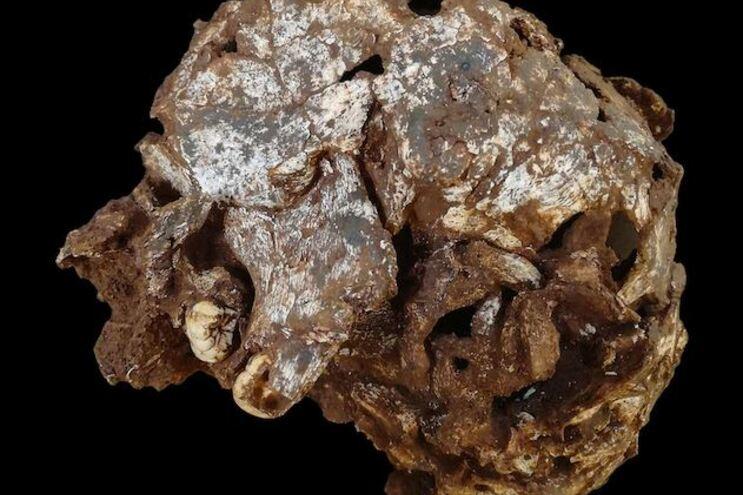 Crânio de criança com 78 mil anos estava entre as ossadas mortais encontradas