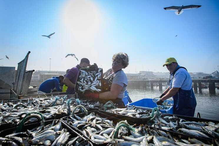Pesca da sardinha regressa esta segunda-feira após quase sete meses parada