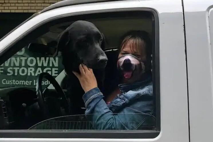 Roubou carrinha com 12 cães mas foi apanhado pela dona