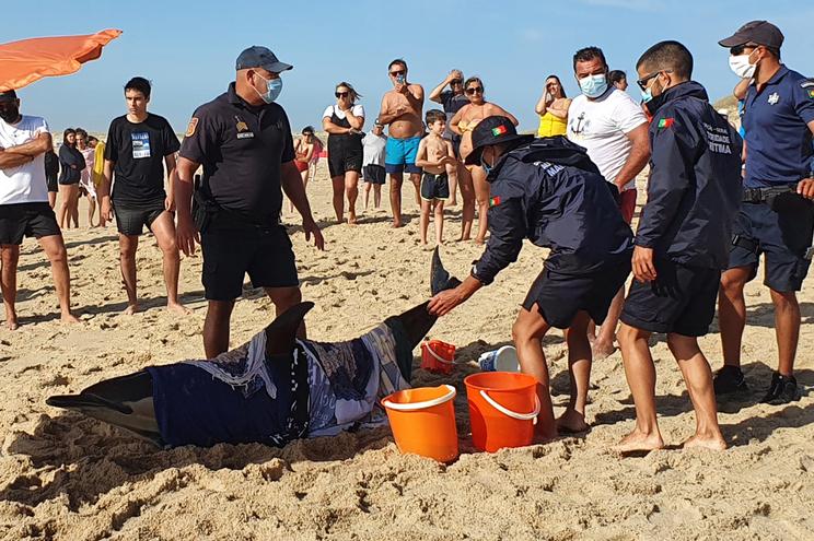Polícia Marítima e nadadores-salvadores socorreram o animal