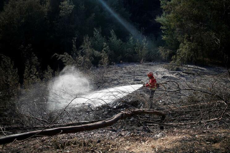 Portugal responde por um quarto da área ardida na Europa